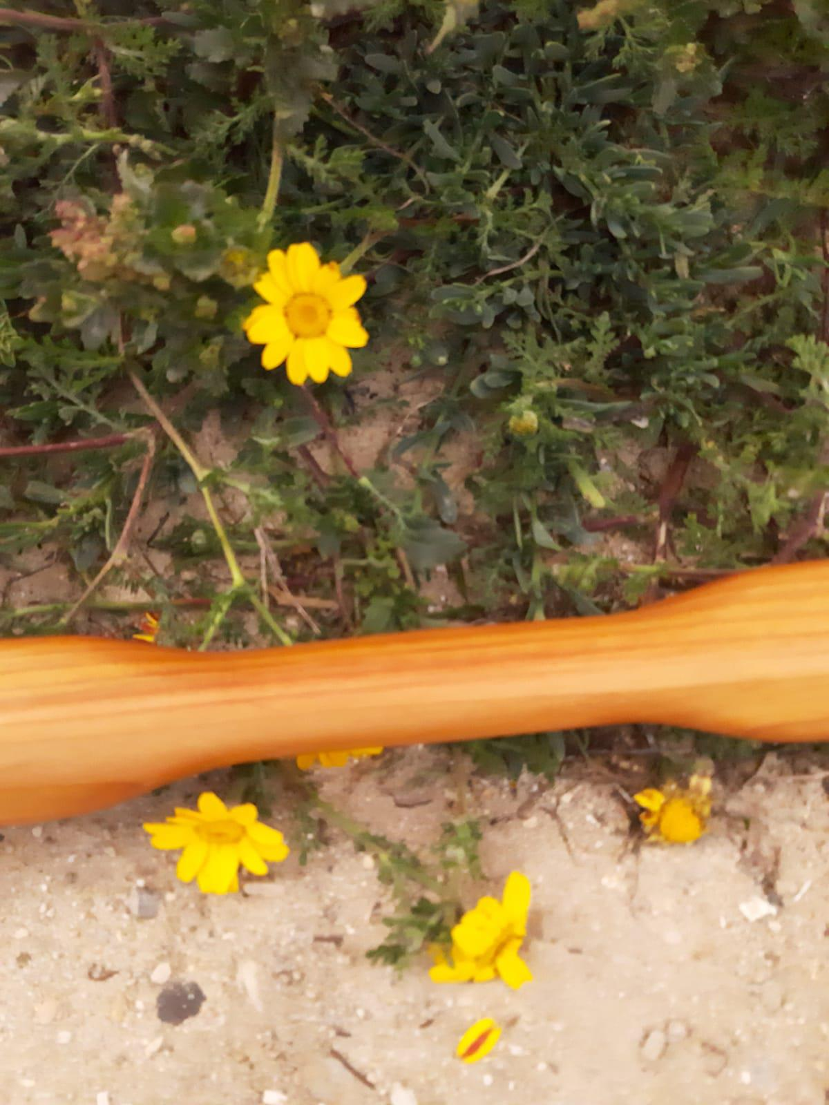 palas groenlandesas nautilus flores 6